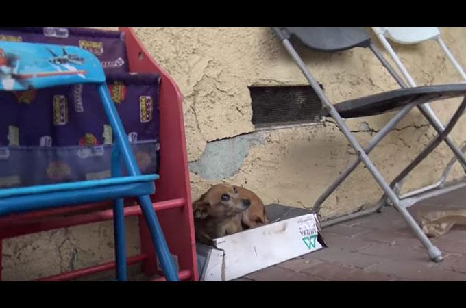 5ヶ月間路上で生活を続けてきた3本足のホームレス犬が安らかな暖かい場所で体を休めるまで