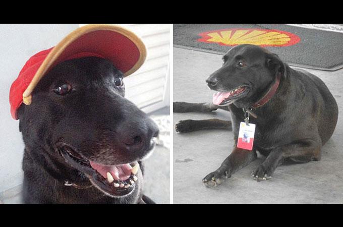 飼い主に捨てられホームレスとなった犬が地球上でもっとも可愛いガソリンスタンドの従業員になる