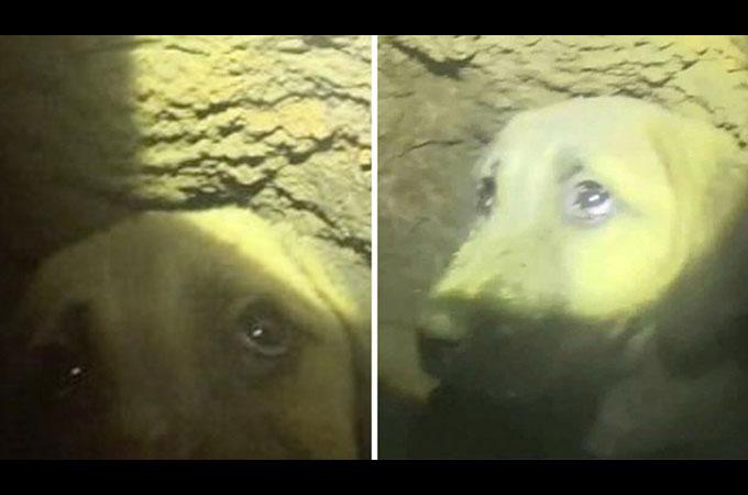 深さ60メートルの井戸の底へと落ちてしまった子犬の奇跡の救出劇