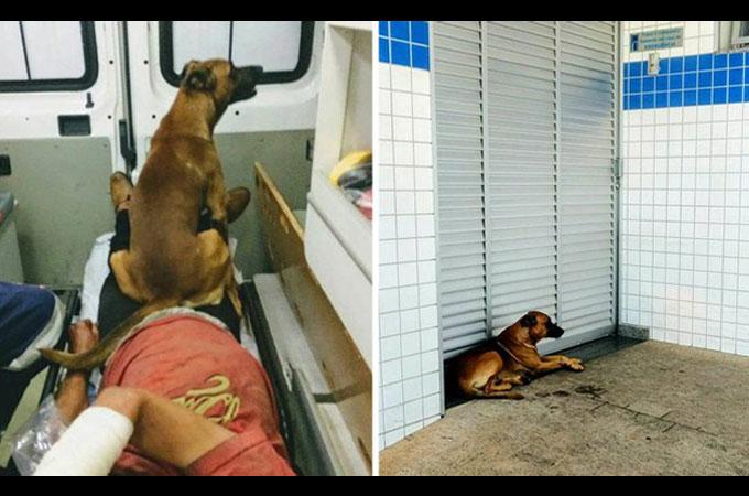 病気になり入院した飼い主さんの帰りを病院の前でおとなしく待つ忠実な犬