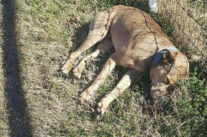 「犬捨て公園」に捨てられ死亡したと思われた1匹の犬が奇跡的に一命をとりとめる
