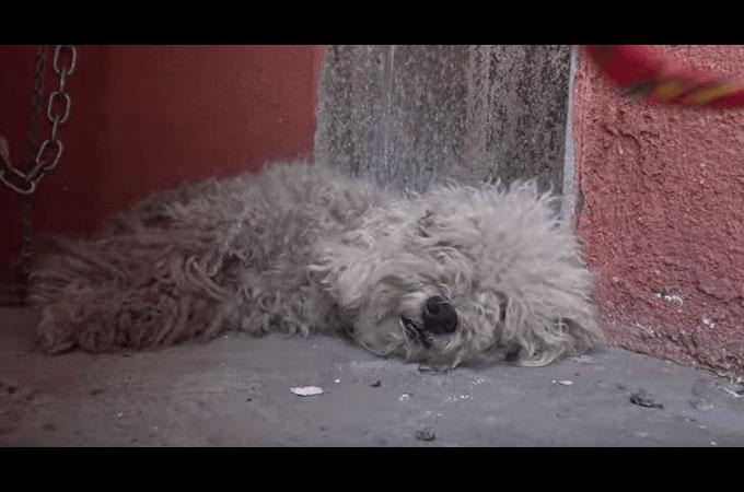 一度は生きることを諦めかけたホームレス犬が愛情豊かに見違える