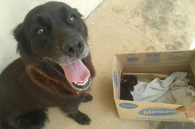 ゴミ捨て場にいた子犬を拾った血の繋がらない犬。その後、また別の母犬が母親代わりとなり面倒をみることに