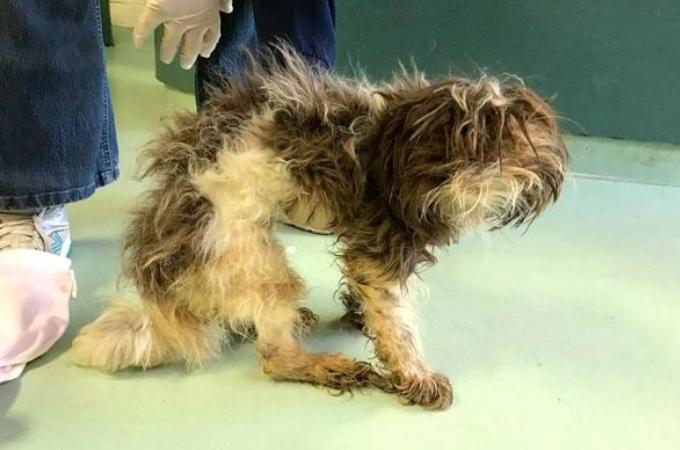生きていることが不思議なほど、やせ細った犬。保護されてから1週間後に見せてくれた姿に思わず涙