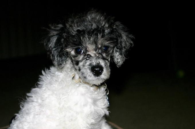 生まれてすぐに「容姿が酷いから売り物にならない」とブリーダーから捨てられた犬が幸せを手に入れるまで