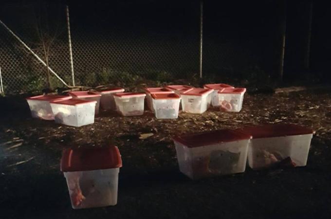 シェルター前に置かれたプラスチックケース14個。その中に入っていたのは子猫や妊娠中の猫を含む16匹の猫たち。