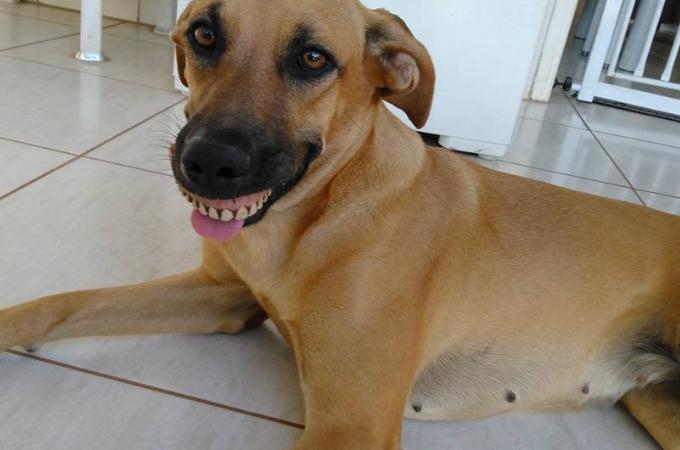 裏庭で愛犬が遊んでいるのを見ていた飼い主さん。そして愛犬が「あるモノ」を発見し爆笑する!