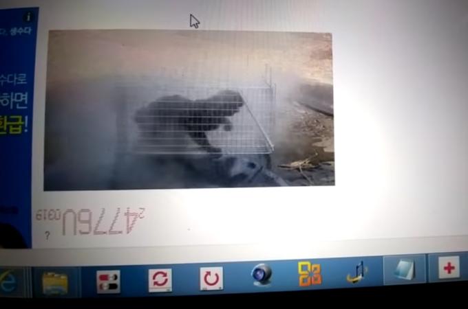 抵抗できない猫に熱湯をかける動画を投稿した韓国人男性。未だ逮捕されておらず犯人に懸賞金がかけられる