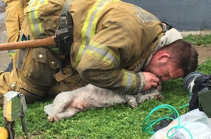 住宅火災によって心臓と呼吸が止まってしまった犬に心肺蘇生法を施し命を救った消防士