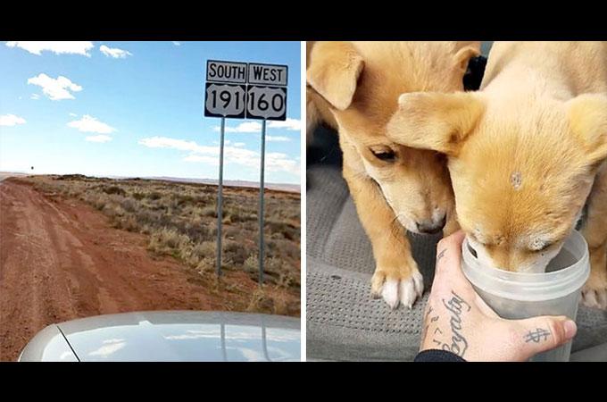 砂漠の真ん中に投げ出された2匹の子犬が車で旅をしていた兄弟によって救われる