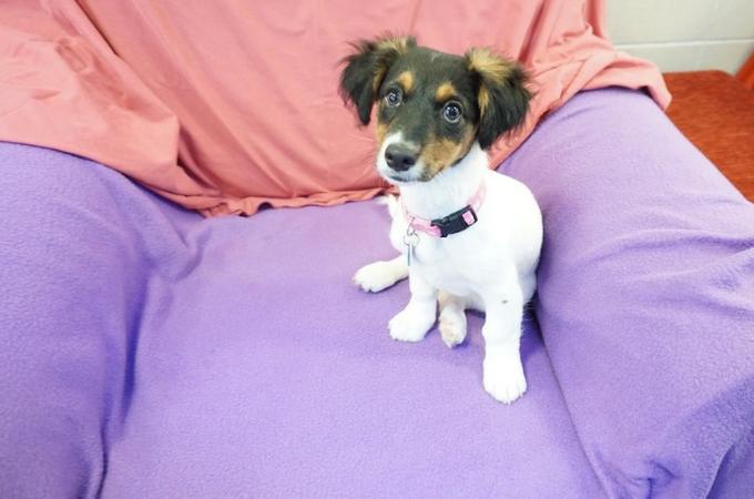 カップルの破局により施設に送られた生後3ヶ月の子犬。施設が受け入れ拒否すると飼い主が思わぬ行動に