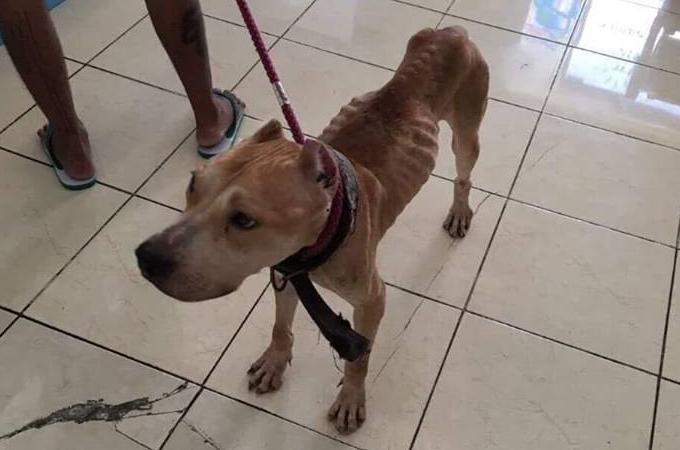 病気にかかり動物病院へ運ばれた犬。そのまま飼い主に捨てられた挙句、獣医にも見捨てられてしまう。