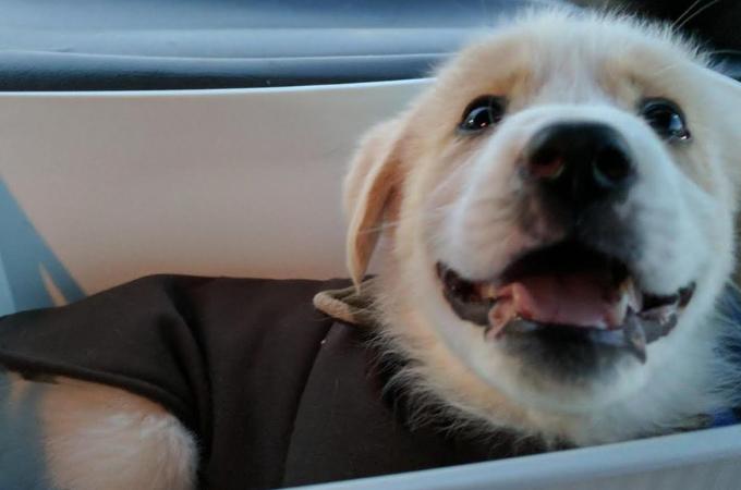 ゴミ箱に捨てられた前足のない子犬。酷い虐待を受けるも、前向きに第二の人生を歩み出す