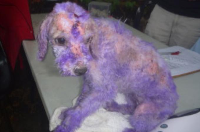 皮膚病を患っている愛犬にとんでもない行為をした飼い主。その驚きの理由と、その後の経過とは