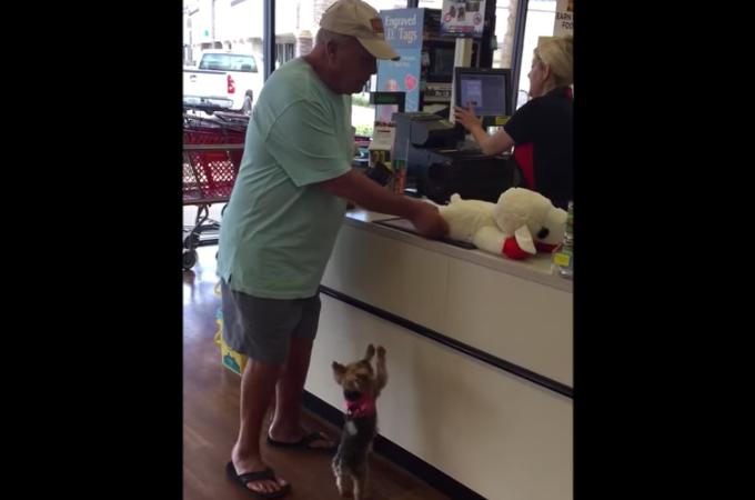 飼い主さんにぬいぐるみを買ってもらった子犬。自分のものと分かると大はしゃぎしてある行動をとる!