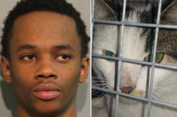 沸騰したお湯を猫にかけている動画をFacebookに投稿した男が逮捕。火傷を負って逃げた猫の行方とは