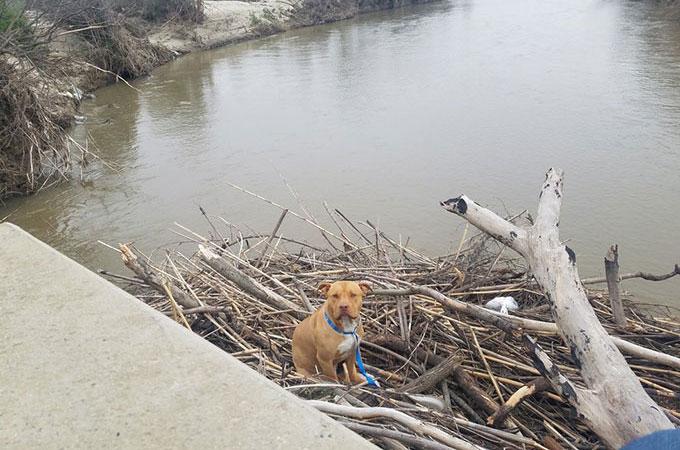 川の真ん中に積み上げられた瓦礫の上で立ち往生した犬が無事飼い主の元へと帰るまで