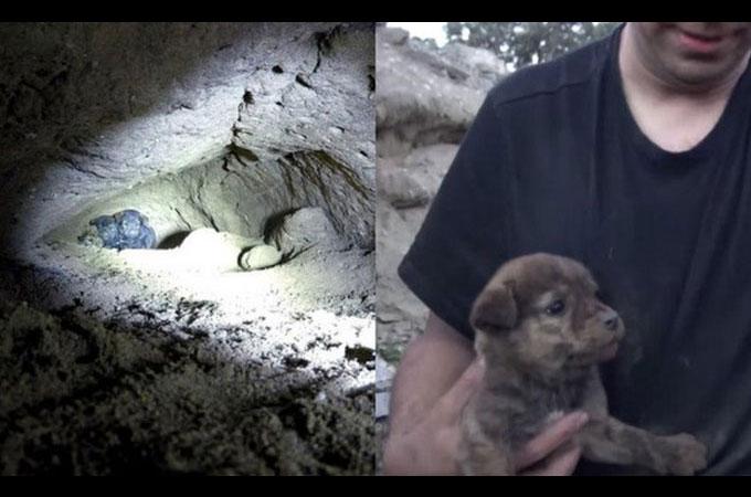 狭い洞窟の中でホームレス犬が出産 9匹の子犬たちを救い出すまで