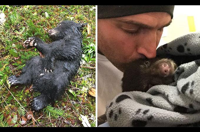 瀕死のクマの赤ちゃんを救ったために罰金と1年間刑務所で過ごすことになった男性