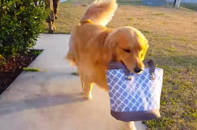 【悲しい!】パパが帰ってきた時と、ママが帰ってきた時の反応が違いすぎる犬の動画。