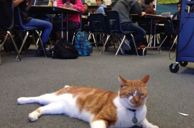 学校の生徒たちと同じように授業を受け、学生証まで持っている猫!その高校生活を満喫する猫の日常とは!