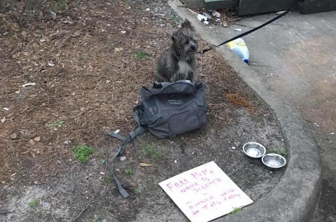 ショッピングモールに捨てられていた犬の側には「子犬無料です」の文字。こうなる経緯になった真実に誰もが驚く。