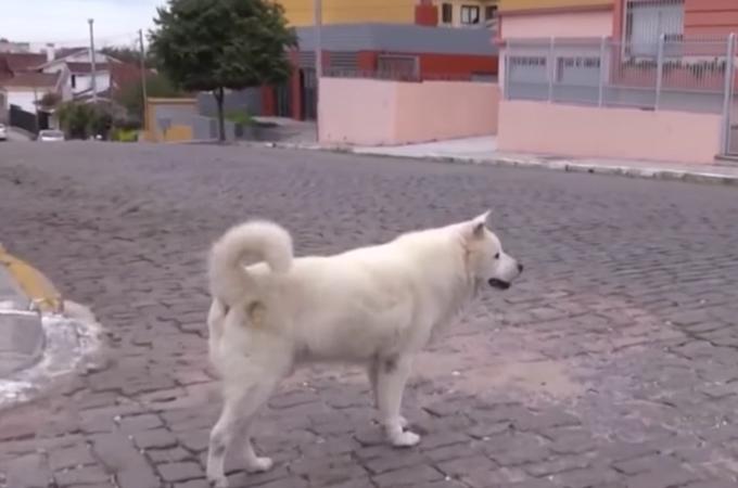 飼い主と10年間、毎日同じ道を散歩していた犬。飼い主に先立たれ、その姿を探す様子に思わず涙