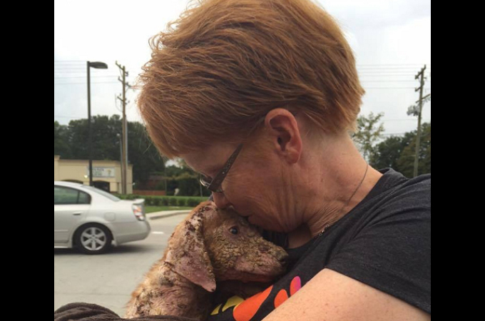 トラックの荷台から放り投げられた酷い皮膚病を患った子犬。ひとりの女性の優しさの包まれ、少しずつ回復する