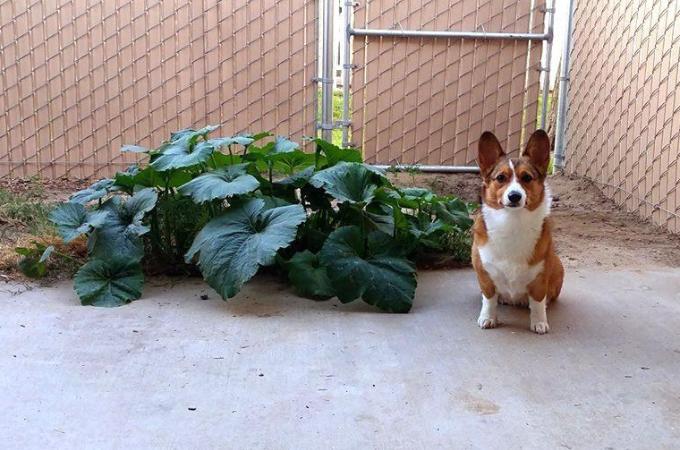 愛犬のフンを庭に埋めて処理していたら、数ヶ月後には見覚えのない光景が!その原因とは!