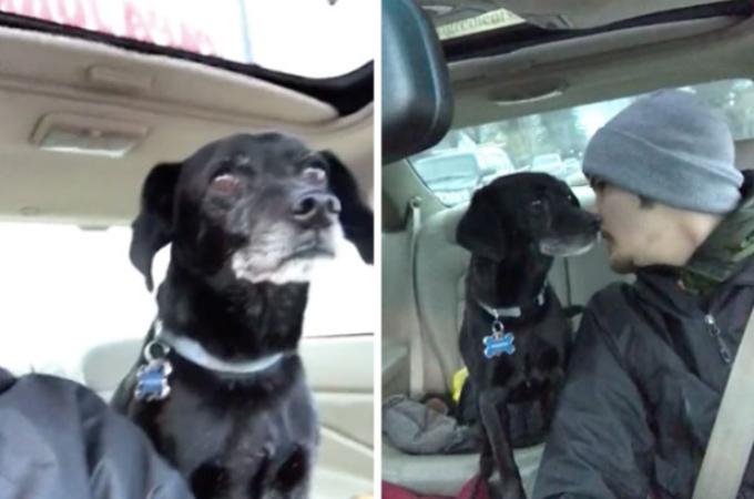 ピザの配達の途中で迷子犬を見つけた男性。クビを覚悟で犬を保護し、飼い主の元へと送り届ける。