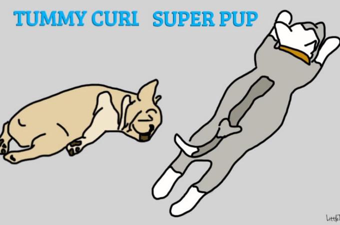愛犬の性格は寝相でわかる!?寝ている時が一番無防備で性格に表れやすい!寝相から読み解く犬の性格6つ