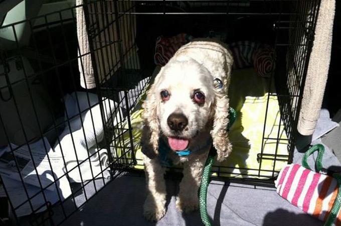 20年生きた犬が飼い主に「面倒を見きれない」と捨てられシェルターに。その後、環境が代わり苦しむ老犬の姿に胸が苦しくなる