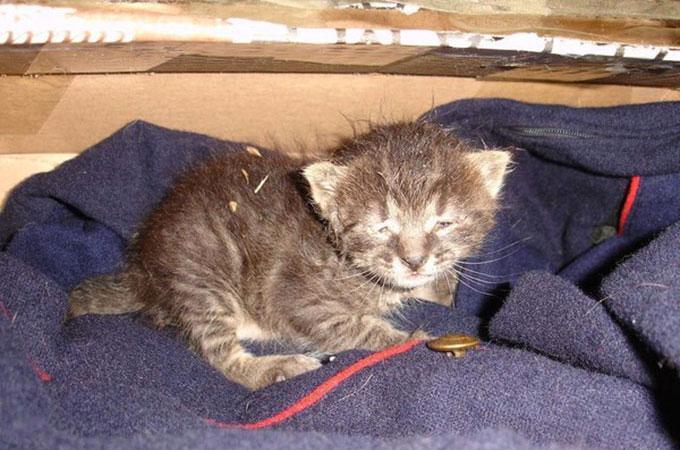 厳しい寒さの中、道路の真ん中で半分凍りかけた瀕死の猫が見つかる