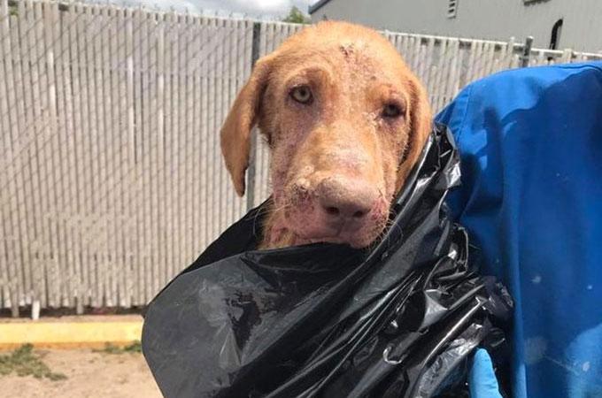 重度の皮膚病を患い黒いゴミ袋に包まれ飼い主に捨てられた犬