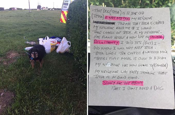 飼い主が引っ越しする際、「私に犬は必要ない」と捨てられた12歳のシニア犬