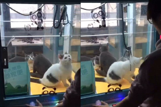 生きたままUFOキャッチャーに入れられおもちゃのように遊ばれる猫3匹。中国で撮影されたこの動画に非難殺到