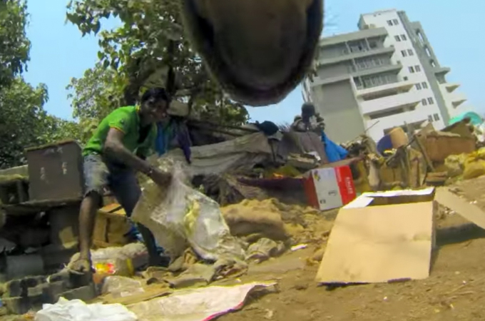 インドの野良犬に小型カメラを装着し、その悲惨な日常を映した動画に胸を締め付けられる。