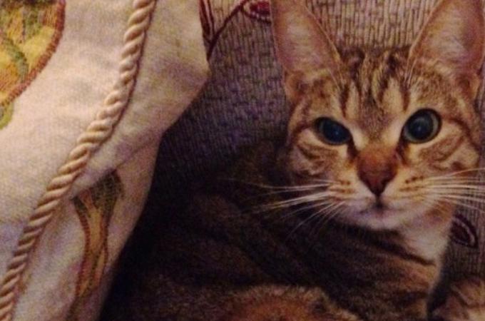 窓を閉め忘れた事がきっかけで、家に中に入り込んだ野良猫。そして、次の日の朝リビングあった驚きの光景とは!
