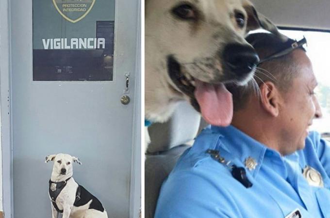飼い主からの虐待を受けひとり彷徨っていた犬が、警察署に迷い込み、その後、安心で安全な場所を手に入れる