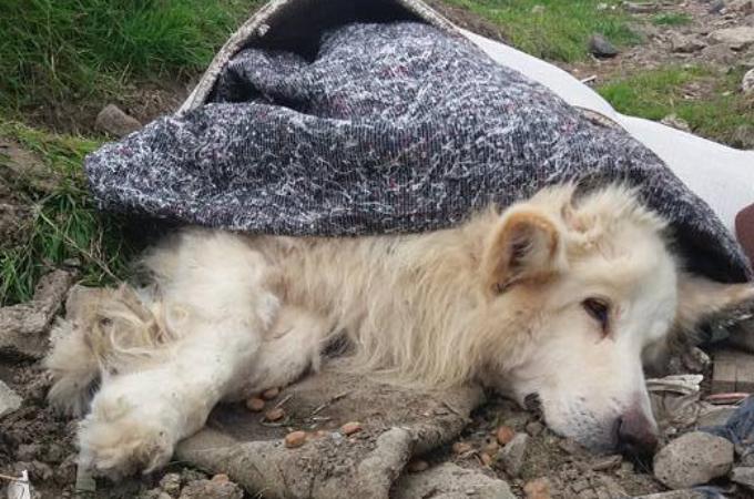捨てられているところを発見された犬。回復の見込みがなく安楽死させられることに。そして、元飼い主に下された判決とは。