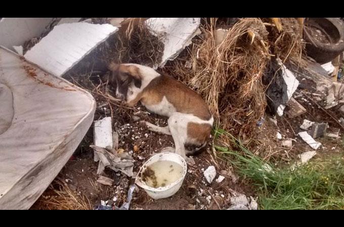 病気の治療費を払うことが出来ないためゴミ置場にゴミ同然のように投げ捨てられた犬