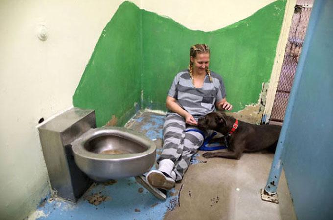 虐待や飼育放棄から保護された犬猫たちの新しい家となったのは刑務所?
