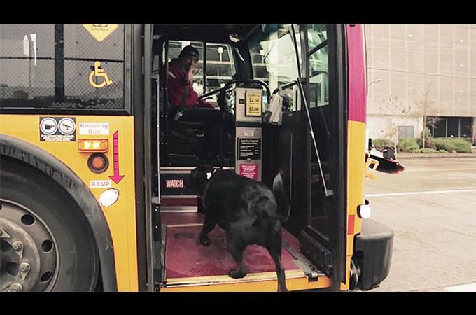公園へ行くため誰の手も借りず一人でバスを乗り継ぐ犬が話題に