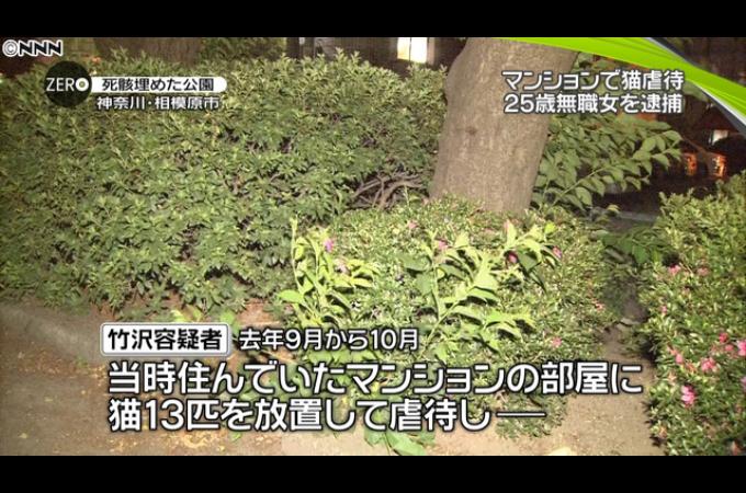 猫11匹の死骸を公園に埋めたとして逮捕された25歳の女。公園に埋めたことは認めるも虐待は否定。