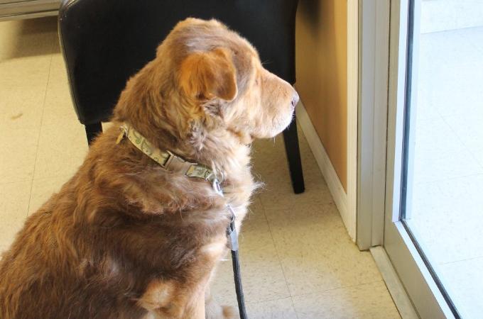 飼い主に捨てられた犬がドアを見つめ待ち続ける姿に多くの人が胸を打たれる。