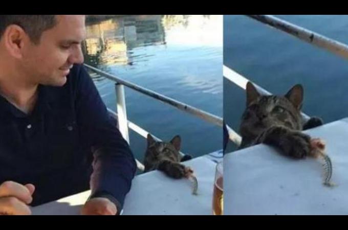 男性の食後の魚を盗もうとした猫。漫画のようにバッチリと目が合い、なぜかそのまま家族となる!