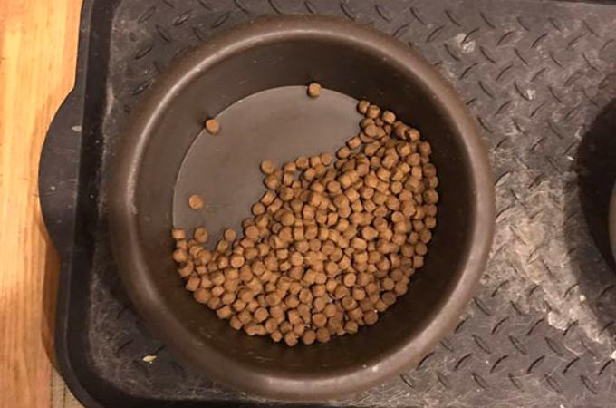 エサを半分だけしか食べない愛犬。その理由に飼い主さんが気付き思わず涙する。