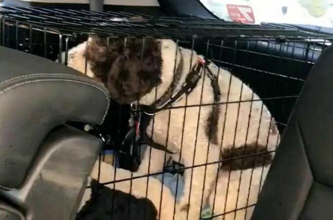 車内の温度が上昇する中、1時間半も犬を檻の中に閉じ込め車内に放置し、ピザを食べていた女性に誰もが呆れる