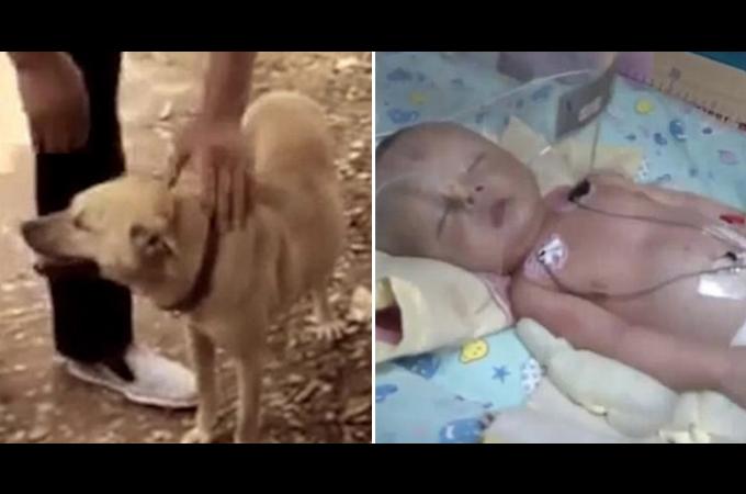 必死に地面を掘り起こしている愛犬を発見した飼い主。そこには生き埋めにされた人間の赤ちゃんの姿が。そして、その後。