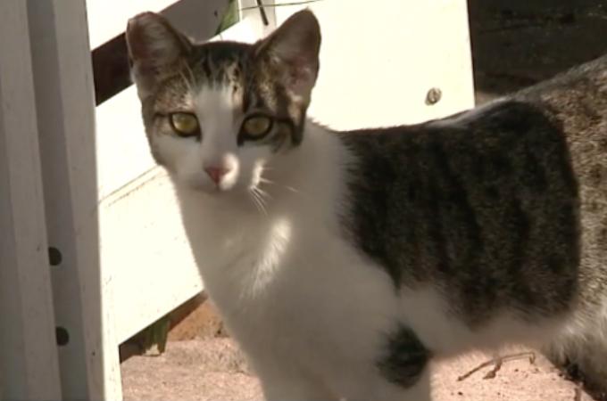 「隣人の飼い猫がトレーラーに来て糞をしたから」という理由で猫が撃ち殺される。